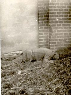 Gardelegen, Germany, The body of an inmate, one of the camp's victims, after liberation, April 1945.