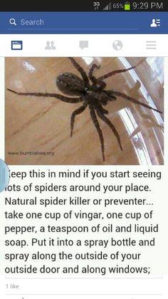 Spider bug spray
