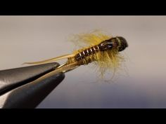 Detailed instructions for tying a Simple Golden Stone Fly Nymph. Best Fishing Reels, Fly Fishing Tips, Fishing Hole, Fishing Lures, Nymph Fly Patterns, Fly Tying Patterns, Fly Fishing Nymphs, Steelhead Flies, Fishing For Beginners