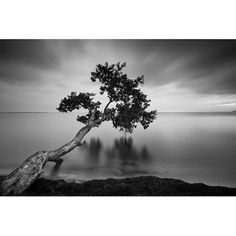 24 inch x 36 inch Black and White Water Tree Canvas Wall Art