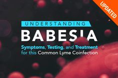 Learn all about Babesia, a tick-borne infection and common Lyme coinfection, including the common symptoms, testing, and treatment methods that work. Lyme Disease Tick, Health And Wellness, Health Fitness, Feature Article, Health Articles, Healthy Tips, Healing, Mystery