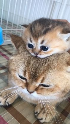 Two cute kittens Two cute kittensYou can find Cats and kittens and more on our website.Two cute kittens Two cute kittens Cute Kittens, Cute Baby Cats, Kittens And Puppies, Cute Funny Animals, Cute Baby Animals, Funny Cats, Cute Dogs, Fluffy Kittens, Cutest Kittens Ever