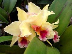 Saiba Tudo Sobre Como Cuidar de Orquídeas ou Fixá-la em Árvores