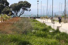 Waitangi Park | Wraight Athfield Landscape + Architecture