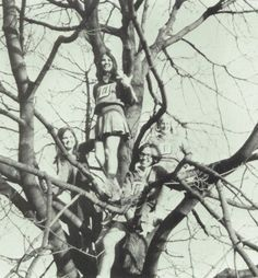 Cheerleaders in a tree - Delphi Community High School.  Delphi, Indiana.  1971