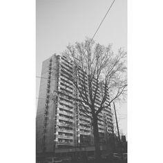 Milano, Corso Sempione