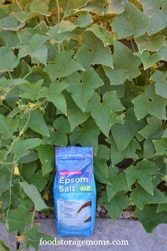 What Can I Do To Make My Garden Grow | by FoodStorageMoms.com