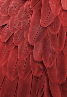 Farb-und Stilberatung mit www.farben-reich.com - Macaw