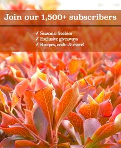 Join our 1,500 + subscribers for seasonal freebies, exclusive giveaways, recipes, crafts and more. http://seasonalfamilyfun.com/join-the-list/