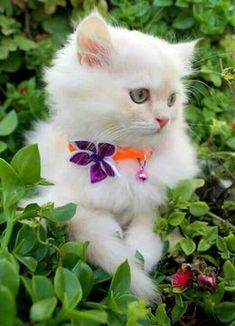 So cute cat Hate Cats, Cute Cats And Kittens, I Love Cats, Kittens Cutest, Animals And Pets, Baby Animals, Cute Animals, Pretty Cats, Beautiful Cats