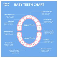 When will your baby's teeth sprout? Check out this baby teeth chart.