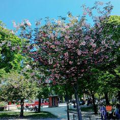 Beautiful World, Dolores Park, Plants, Travel, Voyage, Flora, Viajes, Plant, Traveling