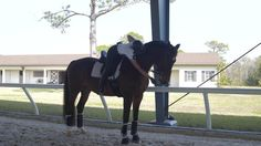 Watch Olympic Dressage bronze medalist, Laura Graves, demonstrate four ways to calm and ride a spooky horse.