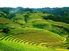 magnificent terraced fields in Sapa
