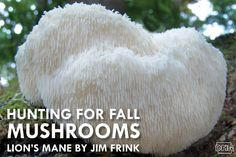 Lion's mane: On the hunt for fall mushrooms | Iowa DNR