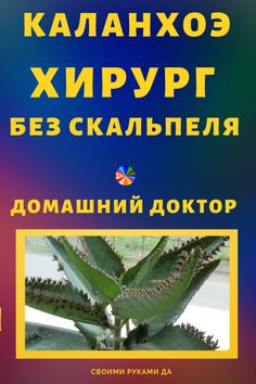 Каланхоэ перистое — хирург без скальпеля. Домашний доктор! Reflexology, Natural Cures, Healthy Nutrition, Herbal Remedies, Migraine, Herbalism, Health Care, The Cure, Health Fitness