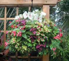 Create creative hanging flower arrangements with Pamela Crawford hanging baskets. These hanging flower baskets add beauty to any garden. Hanging Flower Arrangements, Hanging Flower Baskets, Basket Planters, Hanging Planters, Garden Planters, Container Flowers, Container Plants, Container Gardening, Short Plants