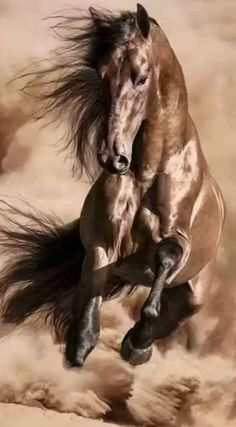 Animals and pets Animals and pets Animals and pets [br] - Wild Animal Photo Cute Horses, Pretty Horses, Horse Love, Majestic Horse, Majestic Animals, Horse Photos, Horse Pictures, Most Beautiful Horses, Animals Beautiful