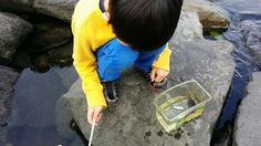 蟹釣り名人