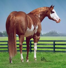 Image result for BEAUTIFUL STOCKY QUARTER HORSES