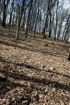Slope of Shy's Hill - Battle of Nashville (Robert Shenk)