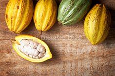 Frutas de cacau