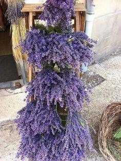 Lavender by Lavender Cottage, French Lavender, Lavender Blue, Lavender Fields, Lavender Flowers, Purple Flowers, Dried Flowers, Beautiful Flowers, Lavender Garden