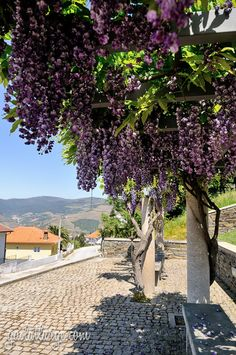 Douro Valley, Portugal (10)