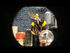 Video featuring Dot, the world's smallest stop-motion animation character. Created by Sumo Science at Aardman Animations using Nokia N8 cellphone equipped with CellScope microscope attachment.