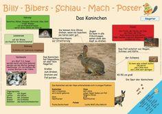 Billy-Biber-Schlau-Mach-Poster Das Kaninchen von MonellaDesigns