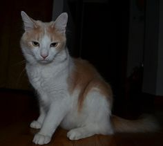 orang white  Wearing ID Tag: No Medical: N/A  Last Status Update: May 04, 2016  See other pets listed  CT Lost Pets    Last Seen: Ridgewood Drive       Contact: CLICK HERE to contact the Person that listed this LOST Pet... Description:   No Description Provided Would you like to subscribe to comments on this page?    Post Comment or Message  People will support your comment with Post Comment There are 0 new comment. Click to view     Views: