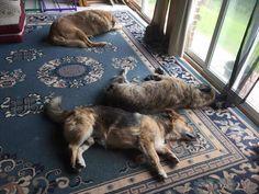 Shhh....look who's enjoying the American life, napping on his W.Va sun porch?? Heyyy Shawty...!