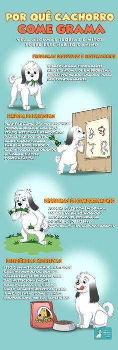 Por quê Cachorro Come Grama