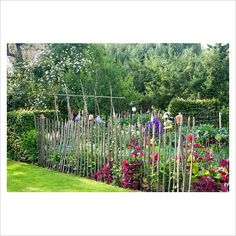GAP Photos - Garden & Plant Picture Library - Cottage vegetable garden bordered with wooden fence and Atriplex hortensis - GAP Photos - Specialising in horticultural photography