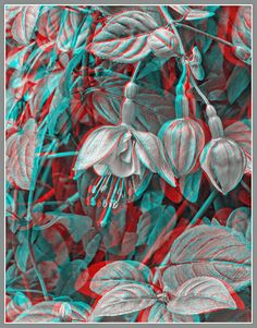 Anaglyph 3D surreal art | Flowers And Leaves Bw - 3d Anaglyph Print by Greg Hjellen