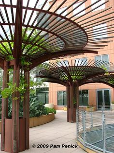 best trees for horizontal growth canopy on pergola at DuckDuckGo Garden Arbor, Rooftop Garden, Garden Trellis, Metal Trellis, Garden Beds, Patio Pergola, Metal Pergola, Backyard, Modern Pergola