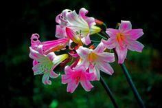 Gorgeous flowers at the Werribee Park Open Range Zoo - Melbourne Australia