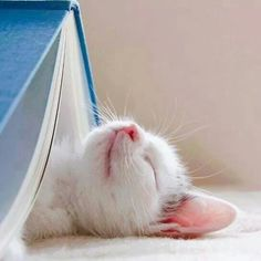 Cats and books. Best thing in the world.