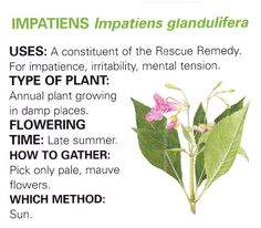 Impatiens uses and method