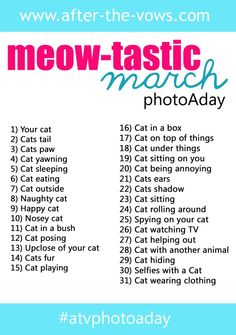 Meow-tastic March photo a day challenge on Instagram