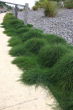 How To Use Succulent Landscape Design For Your Home Succulent Landscaping, Front Yard Landscaping, Succulents Garden, Back Gardens, Outdoor Gardens, Landscape Design, Garden Design, Australian Native Garden, Low Maintenance Garden