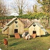 coops, supplies, and lots of information on raising chickens...love these coops and chickens