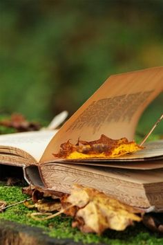 A googd Book in Autumn _ Un buon Libro in Autunno