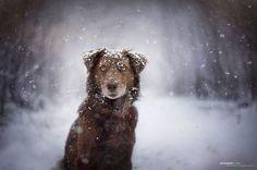 Снежной зимой. Автор: Anne Geier.