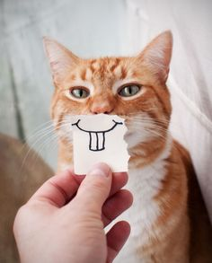 a funny smile.Looks like my kitty