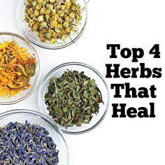 Top 4 Herbs That Heal
