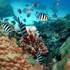 WANTED: Australia - diving the Great Barrier Reef