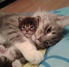 Mom & son..Him is mine, I'ma keep him fur-ever. Him is purrfect! Mommy wuvs you sooooo much