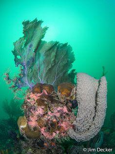 Best Underwater Compact Cameras of 2016