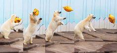 20150503 釧路動物園 シロクマのミルク
